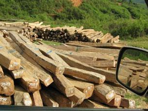 Illegal-Logging-1-305.