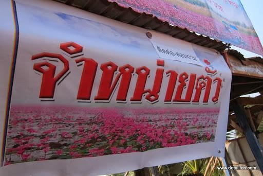 IMG_1798.jpg /Ride to sea of red lotusses - Kumphawapi district Part 3 Udon Thani Intl Air  Bike/N.E. Thailand Motorcycle Trip Report Forums/  - Image by: