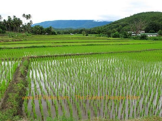 img_6560.jpg /Wet season: pottering around the Mae Hong Son Loop/Touring Northern Thailand - Trip Reports Forum/  - Image by: