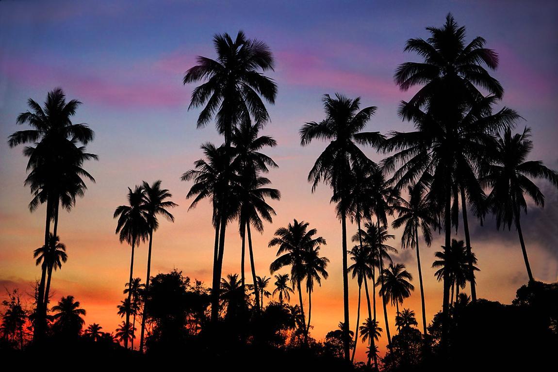 khanom-coconuts-by-night-1cc.
