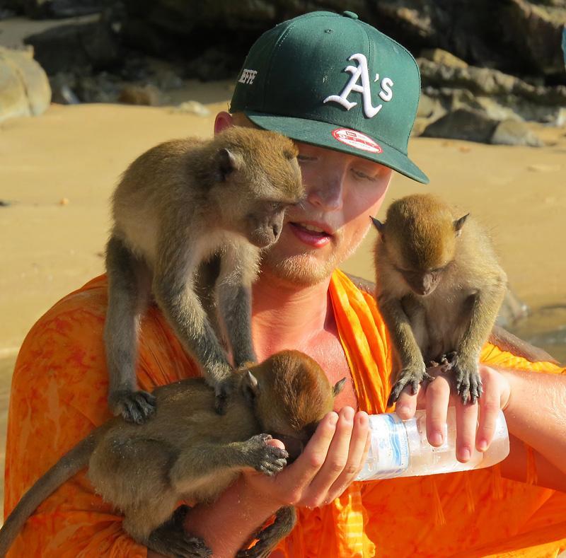 krabi-monkeys-thumb.