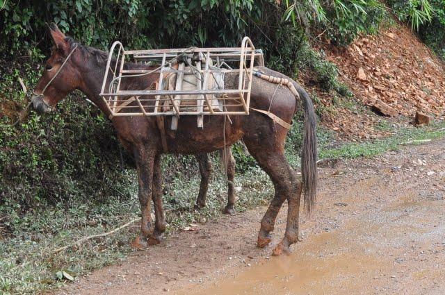 Laos%202-2.