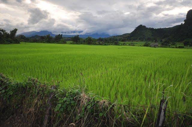 Laos%202-29.