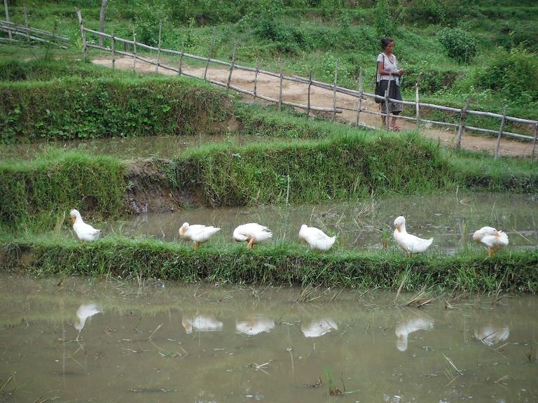 Laos-Xam Neua-Muang et-Motorcycle (49).JPG