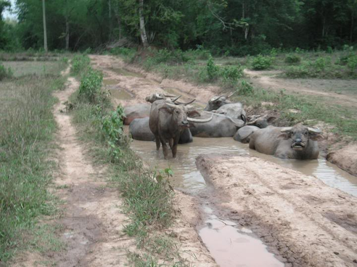 laos200929.