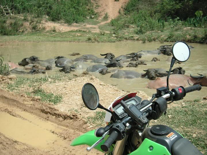laos20095.
