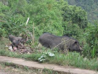 Laos2010Peters184.