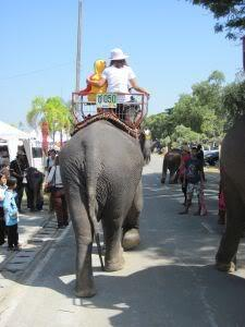 License-achildsride.jpg /Surin...The Elephant Festival pix/N.E. Thailand Motorcycle Trip Report Forums/  - Image by: