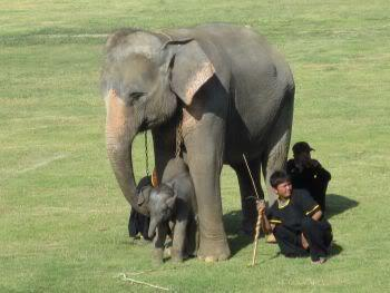 mom2-weekoldbaby.jpg /Surin...The Elephant Festival pix/N.E. Thailand Motorcycle Trip Report Forums/  - Image by: