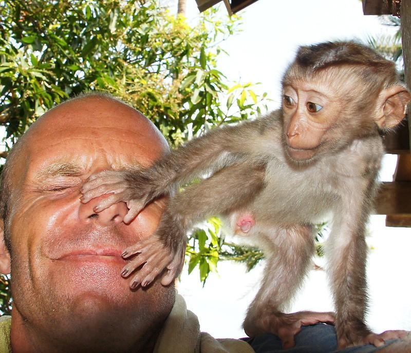 monkey-ich-thumb.