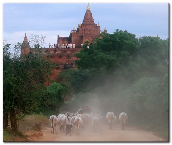 Myanmar105.