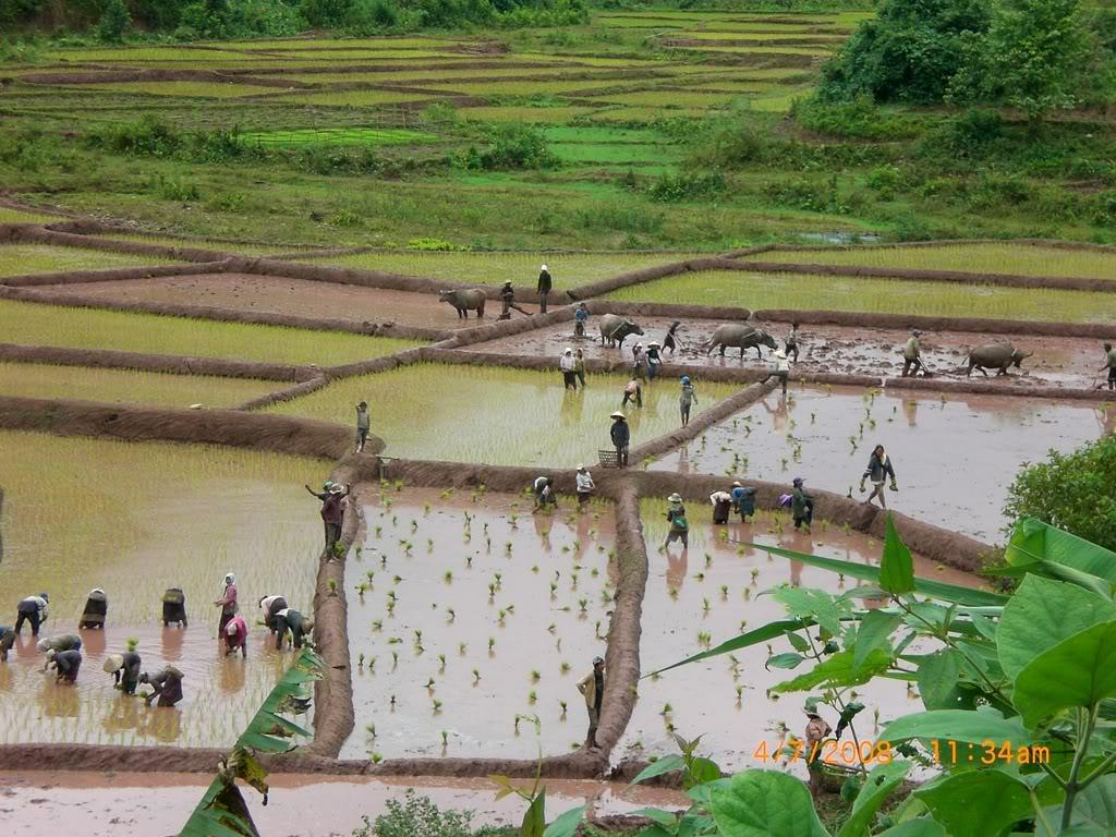 PlantingRice.jpg /Laos - Riding What You Got!/Laos Road  Trip Reports/  - Image by: