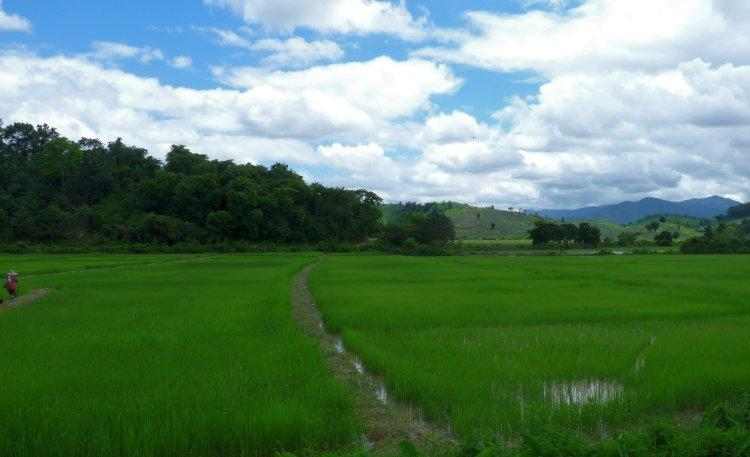 rice-paddies-1.