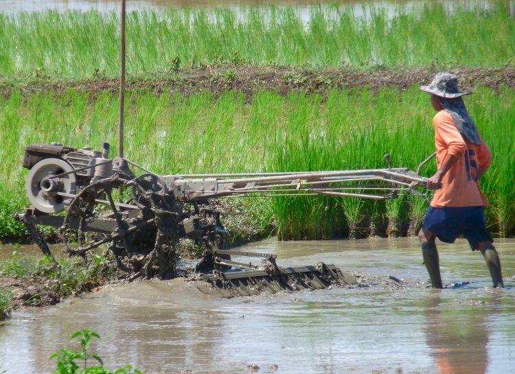 rice-paddies-3.