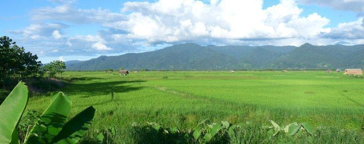rice-paddies-4.