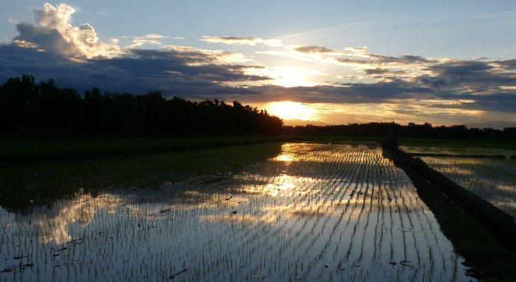 rice-paddies-54.