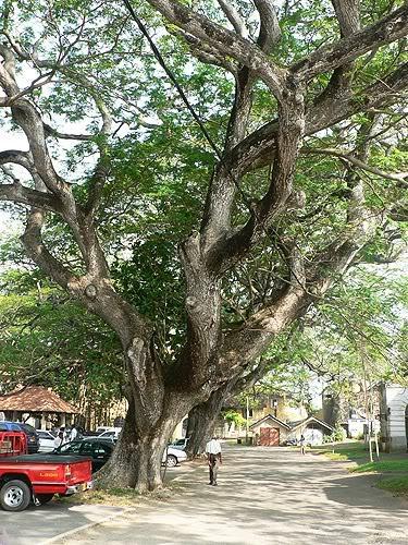 srilanka41.jpg