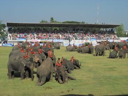 Stadium--center.jpg /Surin...The Elephant Festival pix/N.E. Thailand Motorcycle Trip Report Forums/  - Image by: