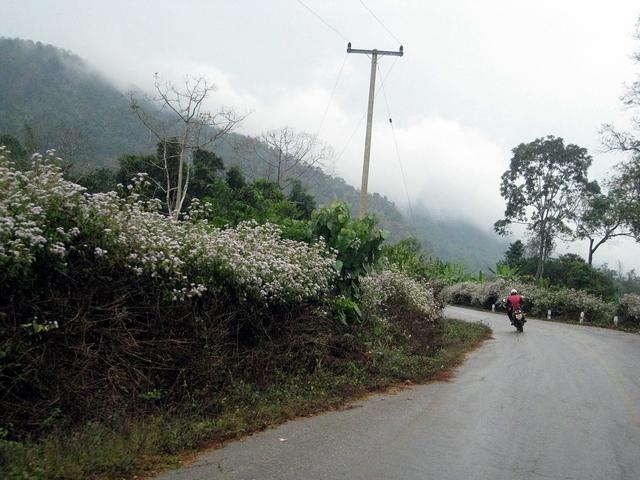 xmas8.jpg /GT Rider Chiang Mai Christmas Ride 2008/Touring Northern Thailand - Trip Reports Forum/  - Image by: