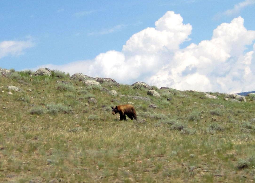 YellowstoneJuly28th_028.jpg